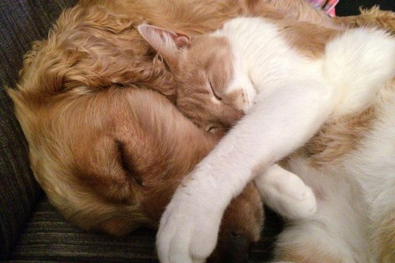 犬と猫が寄り添って寝ている様子