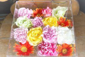 ガーベラやカーネーションなど、ケースに収められた色とりどりの花々